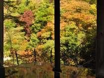 秋ならではの自然の色彩を一面でお楽しみいただけます。