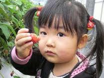 甘いイチゴの食べ放題でお子様も満足♪