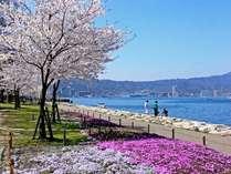 お花見の季節がやってきます♪滋賀県には桜の見どころスポットがたくさん♪ぜひお越し下さいませ
