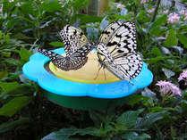 ◆【ふれあい昆虫館入場券付】昆虫宝島、体験隊♪《朝食付》駐車場無料♪
