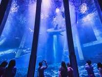 【シーパラ】展示水槽には世界最大魚種「ジンベエザメ」も登場