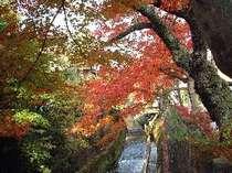 江名子川の紅葉!