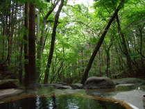 新緑の風景です。生命の息吹を感じられますね。