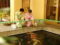 館内には鯉の泳ぐ池もございます。エサはフロントにて販売中!