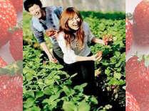 ★【期間限定】摘みたてイチゴ 30分食べ放題付き♪ちちぶいちご狩りプラン☆