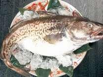【寒の時期限定】~冬の庄内の味覚「寒鱈」を味わう~寒鱈+お銚子付