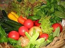 自家農園で太陽の日差しを沢山浴びて育てた採り立ての高原野菜です
