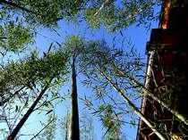 外観を囲む竹林