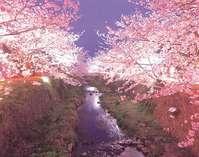 【一の坂川】 当館から車で10分。春は桜が咲き、夜間にはライトアップして夜桜観賞が楽しめます