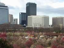 大阪城公園の梅林とホテル