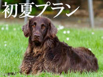 *愛犬と初夏の伊豆高原へ♪(イメージ)