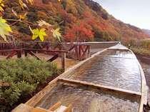 屋上露天風呂-秋の様子。紅葉の見頃は11月上中旬です。