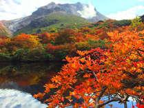 ひょうたん池◆姥ヶ平から望む色鮮やかな紅葉
