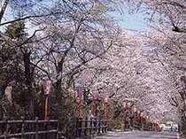 当館前の桜坂☆彡