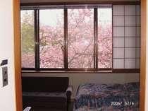 5月中旬和洋室から見える八重桜~この時期だけは2階の和洋室が特別室(例年)