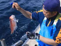 伝統ある延縄漁で獲る高級魚【グジ】を堪能して下さい!!