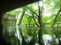 水面に緑が揺れる露天風呂【初夏頃】