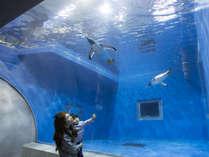 【ファミリーにおすすめ】人気チケット付でお得!越前松島水族館入場券(H30)