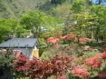 山小屋の湯と内庭