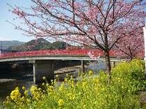 2月より咲く河津桜・当館より車40分