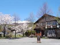 春のアルム。桜が咲くのは5月中ごろ。