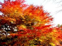 *木曽路は美しい紅葉で有名な人気の紅葉スポット!もみじや楓などを見ながら紅葉散策もおすすめ♪