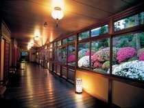 華やかな群生のつつじをご覧いただける宴会場前の廊下。