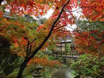 渡り廊下から見る紅葉