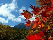 【秋の風景】澄んだ青空に、赤い紅葉が美しく映えます。