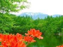 *【初夏の風景】美鈴池のサラサドウダンが。自然郷内では6月下旬~7月初旬頃までが見頃です。
