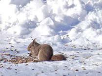 【冬の動物】冬の時期、中庭ではリスが餌のヒマワリの種をほお張る姿が頻繁にみられます。