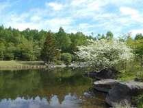 【春】美鈴池のコナシの樹:5月下旬頃見ごろを迎えます。