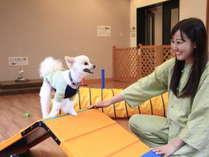 屋内ドッグラン初め、たくさんの館内コンテンツで、愛犬とゆったりと愉しい時間をお過ごしください☆彡