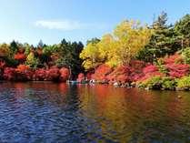 白駒の池紅葉の始まり