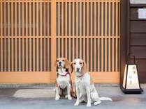 わんちゃん中型犬まで最大2匹ご宿泊可能宿です。
