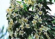 【癒しの森めぐり!】イジュの花やんばるの森(朝食付)