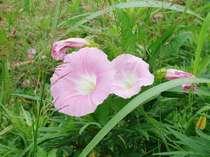 フットパス~アチコチに咲く可愛い花々