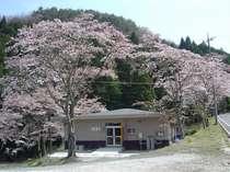 ■ゆったり和室■春には満開の桜が皆様をお迎えいたします