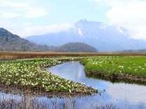 群馬、福島、新潟、栃木の4県にまたがる尾瀬国立公園。