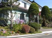きれいに咲いた玄関前のシオン♪