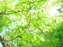 5月は気候もよく、新緑に映える妙義山の絶景シーズン!