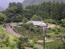 茶畑と杉林に囲まれた隠れ宿