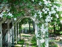 秘密の庭に誘うような花のアーチ。