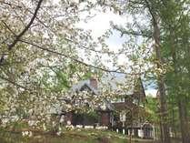 春。遅咲きの山桜とシャレーグリンデル
