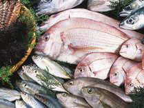 駿河湾の恵みの旬のピチピチのお魚をフレンチ懐石のさまざまなお料理でお愉しみいただきます。
