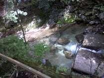 目の前の渓流、ヤマメが見えます