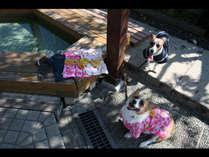 ◇◆ペットと一緒にご宿泊★ペットとの温泉旅行にはペットに嬉しい三大特典をお付けします!