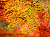 【観光局発信】特別企画♪秋の紅葉・グルメ満喫プラン♪☆特典付き