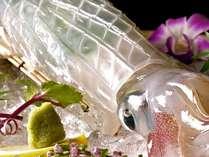 呼子直送の活きイカは人気No.1の料理。透明すぎる身は新鮮な証。甘くてとろけるような味わいです。