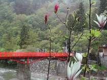 吉野山の桜を見物するゆったり温泉プラン